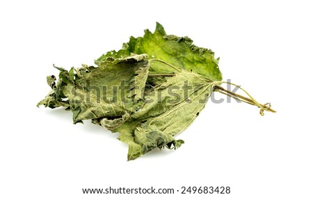 Nettle tea leaf - stock photo