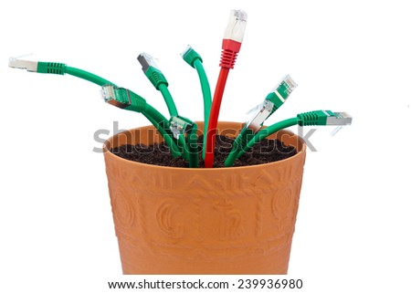 network cables in a flowerpot. symbolic of broadband and internet development. - stock photo