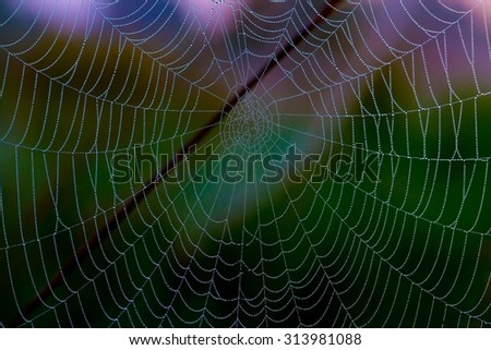 Network cobwebs on the grass - stock photo