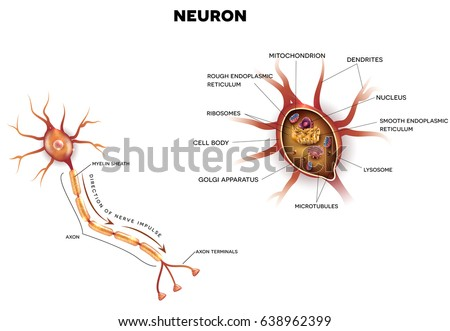 Neuron nerve cell that main part stock illustration 638962399 neuron nerve cell that is the main part of the nervous system close up ccuart Image collections