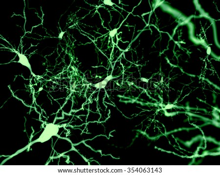 Neurons marked by fluorescence