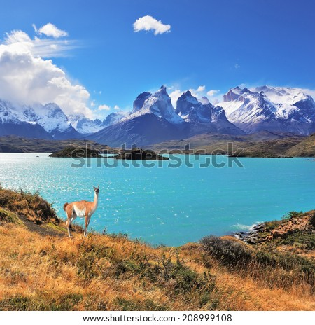 Neverland Patagonia. Emerald Lake Pehoe water on the hill stands a graceful guanaco. Away in the clouds - the cliffs of Los Kuernos - stock photo