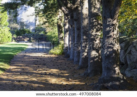 Nice Bedford Stock Photos Royaltyfree Images  Vectors  Shutterstock With Remarkable New Bedford Massachusetts Usa  May   Row Of Korean Pines With Beauteous Covent Garden London Also Garden Centre Glasgow In Addition Porchester Gardens W And Garden Beds As Well As Hartman Garden Furniture Sale Additionally Organic Garden Mulch From Shutterstockcom With   Remarkable Bedford Stock Photos Royaltyfree Images  Vectors  Shutterstock With Beauteous New Bedford Massachusetts Usa  May   Row Of Korean Pines And Nice Covent Garden London Also Garden Centre Glasgow In Addition Porchester Gardens W From Shutterstockcom