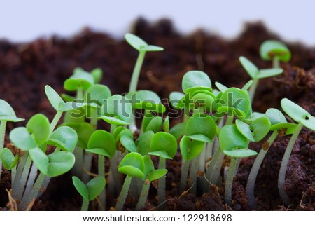new beginning  spring sprouts in black soil - stock photo