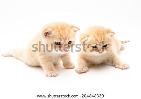 New born baby cat kitten - stock photo