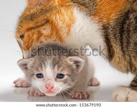 New born kitty cat isolated over white background