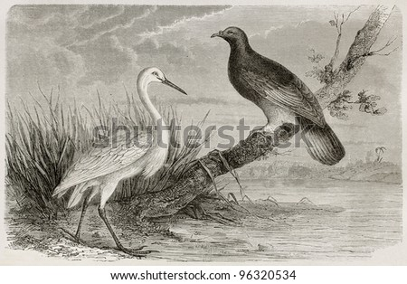 New Caledonia white crane and Goliath Imperial Pigeon. Created by Mesnel, published on Le Tour Du Monde, Paris, 1867 - stock photo