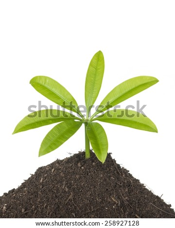 New development and renewal as a business concept of emerging leadership success as an old cut down tree and a strong seedling growing in the center trunk as a concept of support building a future. - stock photo