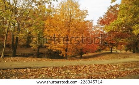 New England Foliage - stock photo