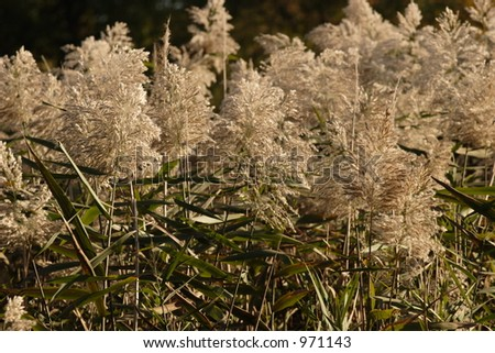 New England Marsh - stock photo