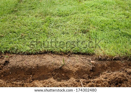 New grass, planting new sod grass in the garden - stock photo