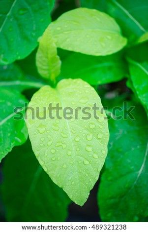New green leaf with raindrops