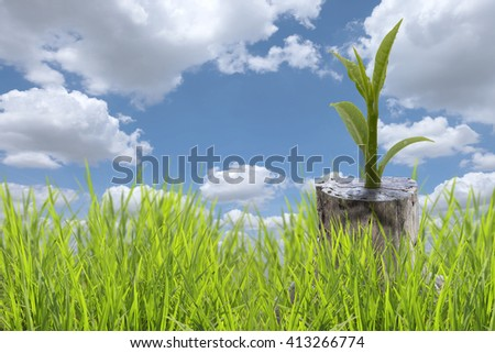 New green leaves born on old tree, nature  background