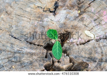 New green leaves born on old tree, textured background , nature stock photo