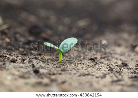 New green sprout growing in summer garden. - stock photo