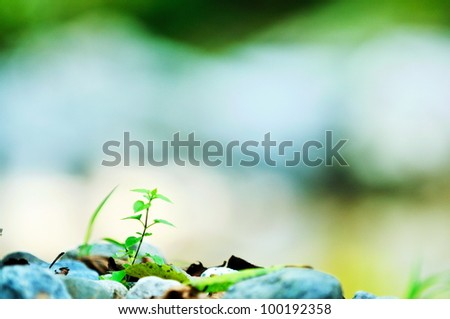 new growth concept with young  green leaf tree in nature background - stock photo
