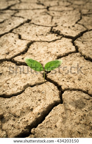 New Growth in Cracked Earth or Small plant in dried cracked mud / Cracked, parched land after a drought. - stock photo