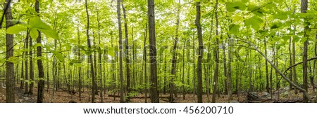New Growth on The Appalachian Trail Panorama shows bright green leaves popping throughout the forest - stock photo