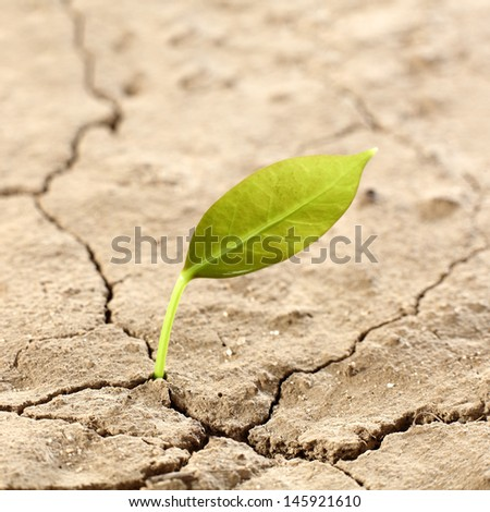 new leaf and earth  - stock photo
