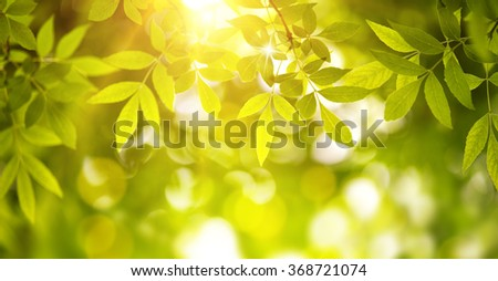 New leaf and sun ray,natural green background  - stock photo