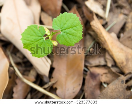 New Leaf Sprout Started In Dried Leaf