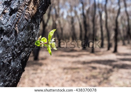 new leaves grown after forest was burn - stock photo