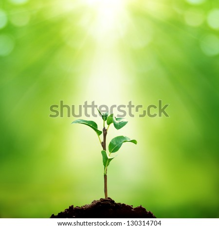 New life - stock photo