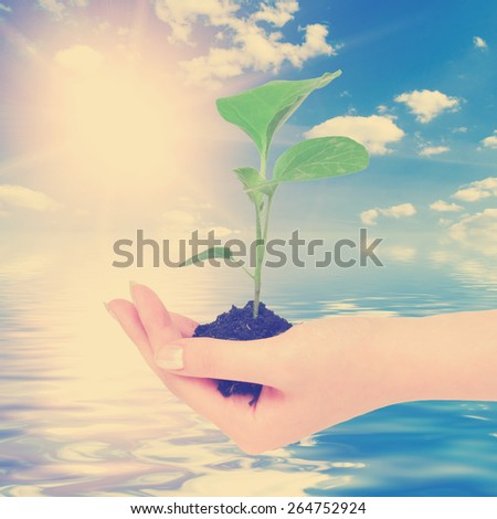New life and sky with water reflection.  Instagram style filtred image - stock photo