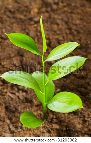 New life concept - green seedling growing out of soil - stock photo