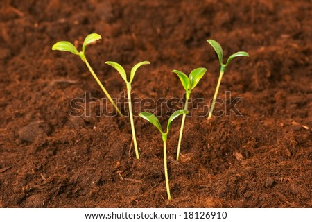 New life concept - green seedlings growing out of soil