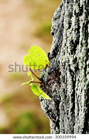 new life concept - leaves on the tree trunk in spring - stock photo