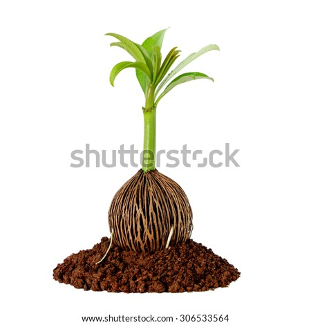 New Life Concept with a Seedling Isolated on a white Background - stock photo