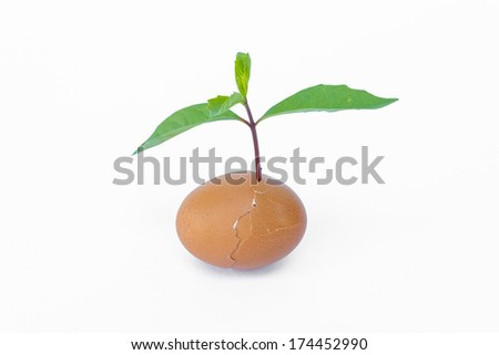 New life concept with green plant in eggshell isolated on white background