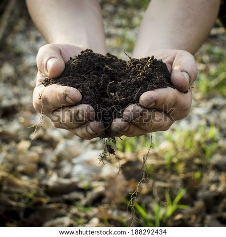 New life in a hands - stock photo