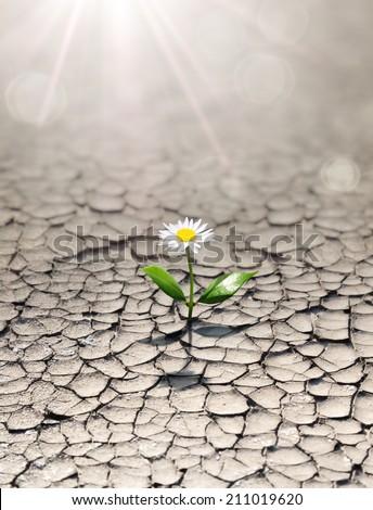 new life in arid land  - stock photo