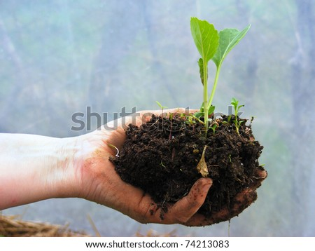 New life in arms - stock photo