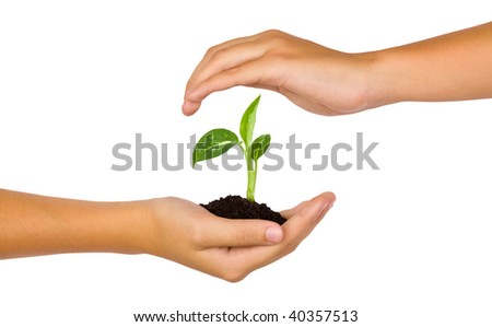 New life in young hands on white background