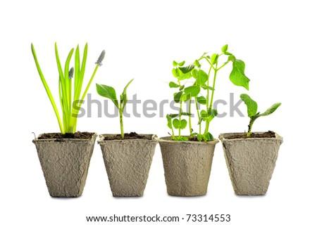 new life: little green plants in pot - studio shot. - stock photo