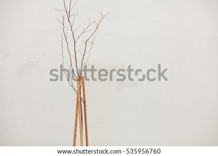 New life, modern landscape gardening, design in industrial metropolis. Young tree without leaves over white wall. Pastel colors. Simple, minimalistic style. Copy-space. Outdoor shot