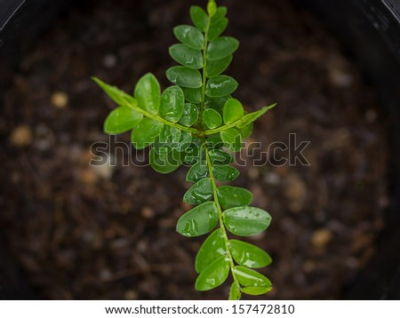 new life plant - stock photo