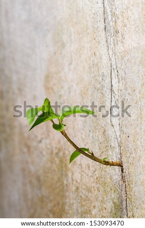 New plant germinates from the crack concrete wall, persistence of survival - stock photo