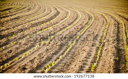 New plants on the field. New life. - stock photo