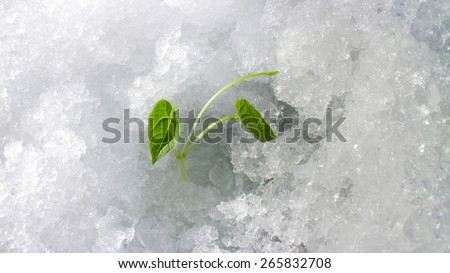 new spring lives, winter on an outcome - stock photo