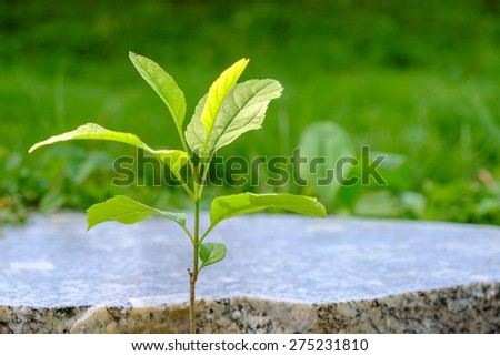 New sprout, concept of business break through - stock photo