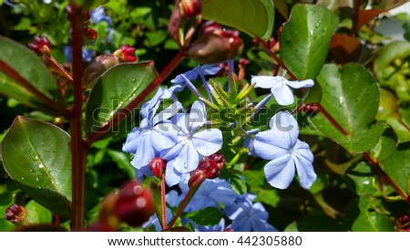 New summer growth with raindrops on flowers - stock photo