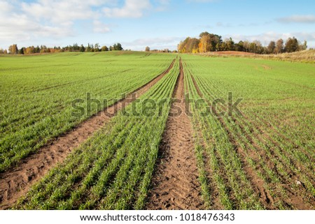 New wheat field in autumn time.