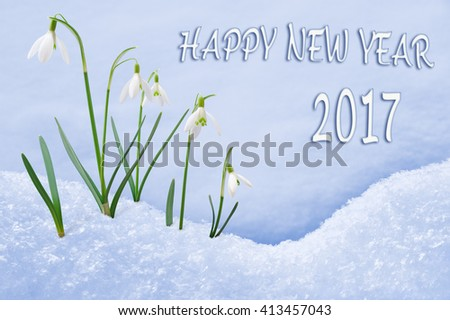 New Year 2017 greeting card, group of snowdrops Happy New Year text in English language, 2017 postcard