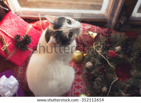 New Year's decoration and the cat near the window - stock photo
