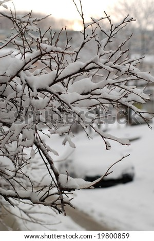 New Year's snow on cherry branches. A city landscape