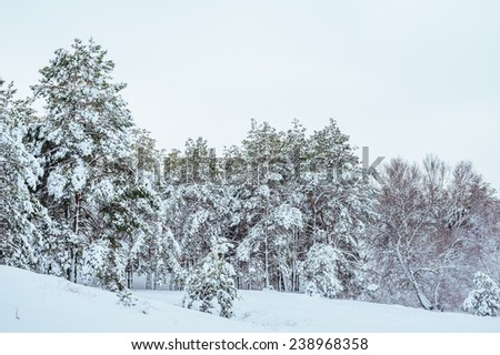 New Year tree in winter forest. Beautiful winter landscape with snow covered trees. Trees covered with hoarfrost and snow. Beautiful winter landscape. Snow-covered tree branch. Winter background.